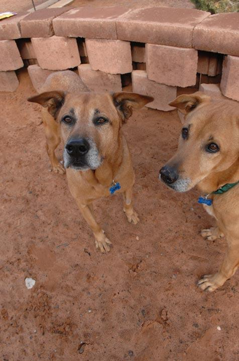 Two dogs who have spent years chained up
