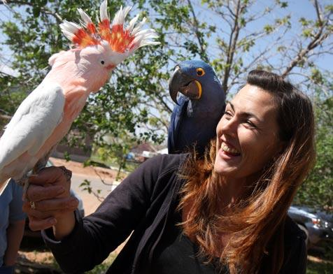A hyacinth and Major Mitchell's cockatoo with a woman