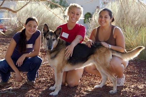 Three animal interns with German shepherd