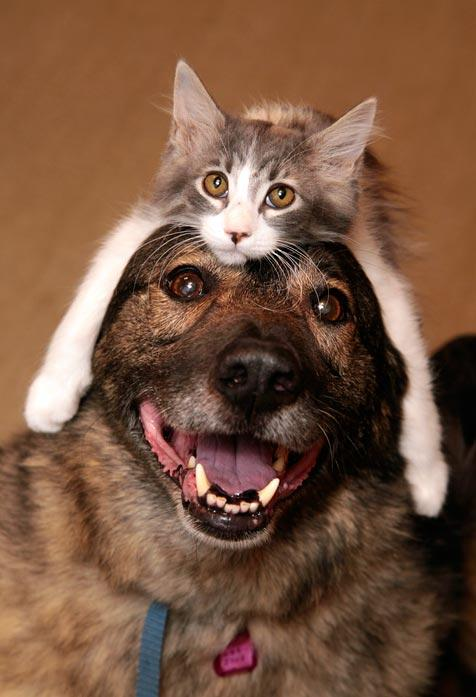 Photo of dog with cat on his head that cheered up a woman suffering from Alzheimer's and helped her remember some old memories