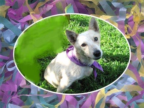 Sweet Sadie the dog