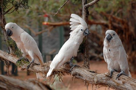 White parrots at Best Friends Animal Sanctuary