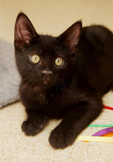 Black kitten rescued from heat