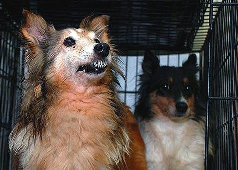Two dogs rescued from a puppy mill and life in the pet trade