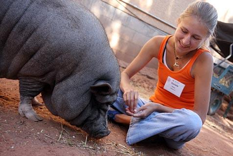 Danielle the 'pig whisperer' intern and Jezebelle the shy pig