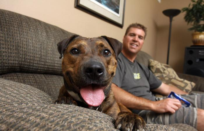 Man with his foster dog, a pit bull terrier
