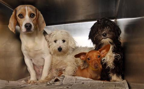 Documenting conditions that dogs like these face in puppy mills could be harder if ag-gag bills pass