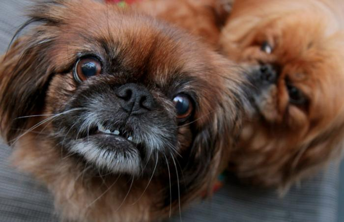 Rosalie and Wadsworth the dogs rescued from a puppy mill