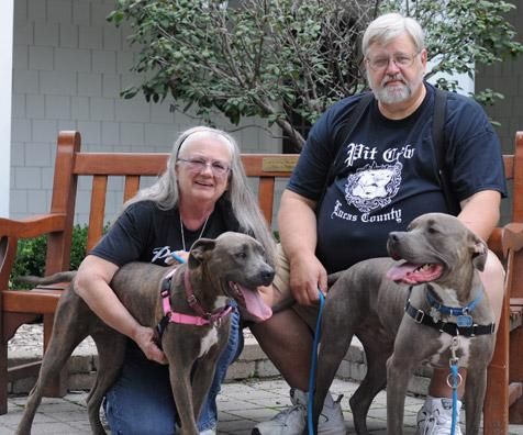 Two pitbulls and their owners