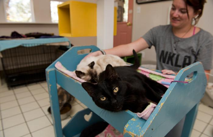 Caregiver pets Jill, the black motherly and compassionate cat, and Suchin, another cat whom Jill befriended