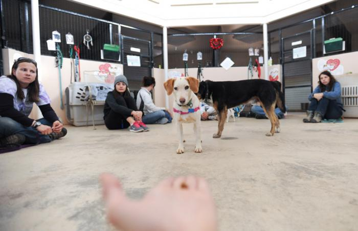 Zena the timid dog receives an offering at shy dog class