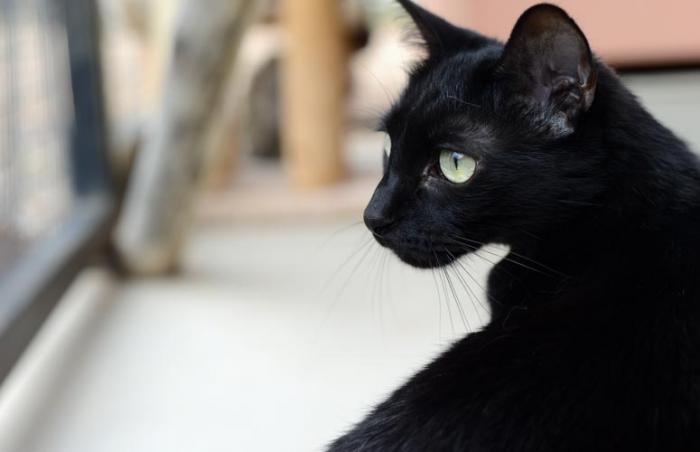 Violet the black cat used to be a shy wallflower