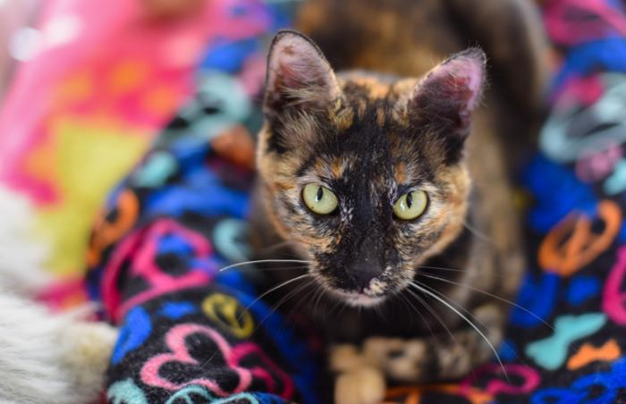 Flora the tortoiseshell cat with neurological challenges