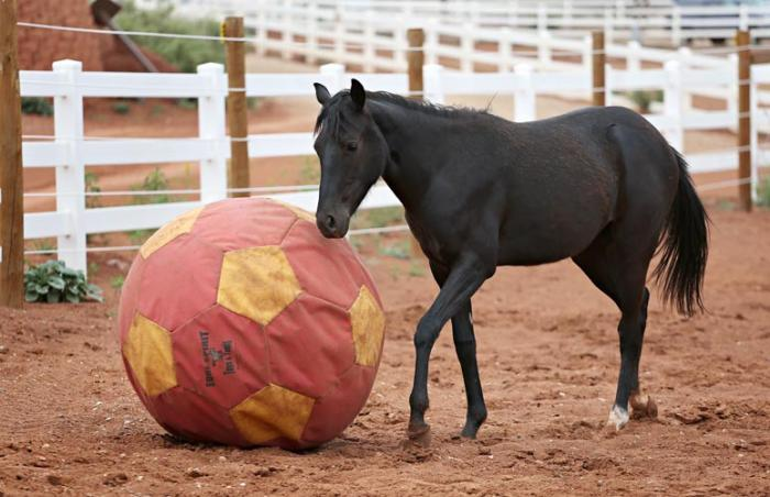 Uno the horse with her ball