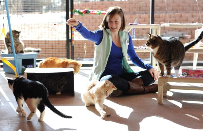 Samantha Long volunteering with cats at Casa de Calmar at Best Friends Animal Sanctuary