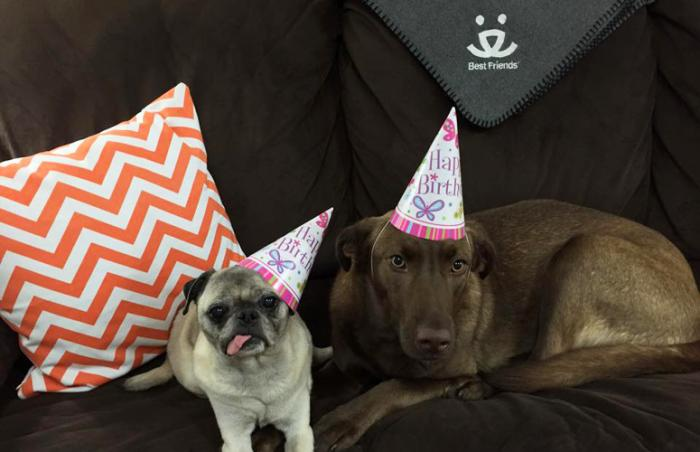 Two dogs Puggy and Piper at the birthday celebration