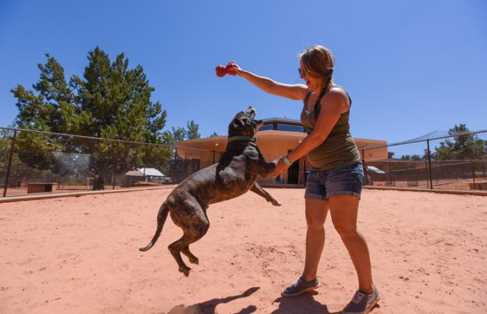 Sherman the American bulldog mix playing outside with a caregiver