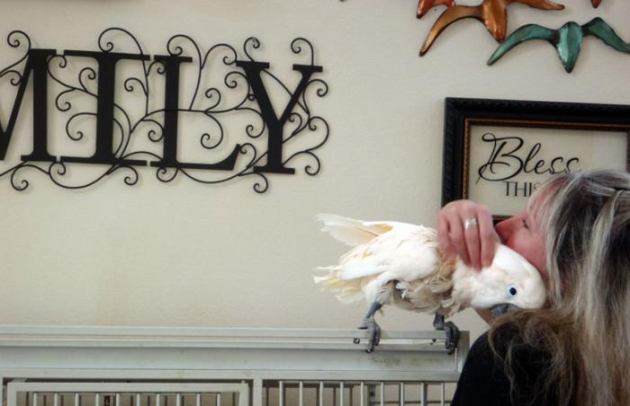 Windy the cockatoo with Yvette