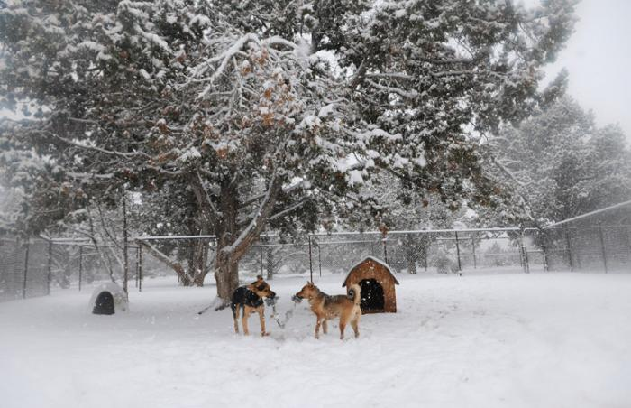 Dogs playing in the snow, a great activity for animal enrichment