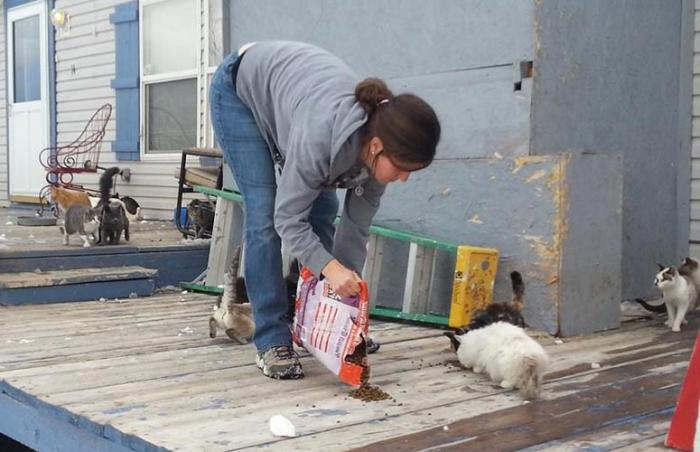 Fort Collins Cat Rescue and Spay/Neuter Clinic helps dozens of neglected cats