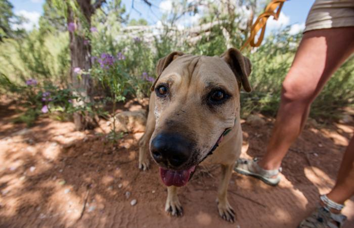Beloved Hurricane Katrina survivor dog Scratch feels perfectly at home in Dogtown