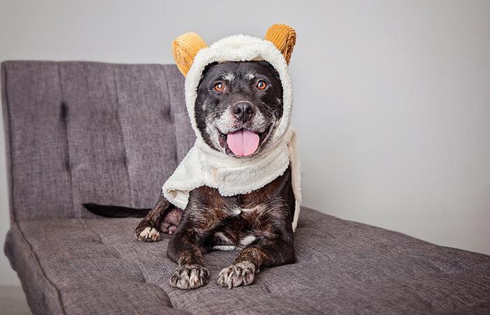 Dog dressed up like a bear for Halloween