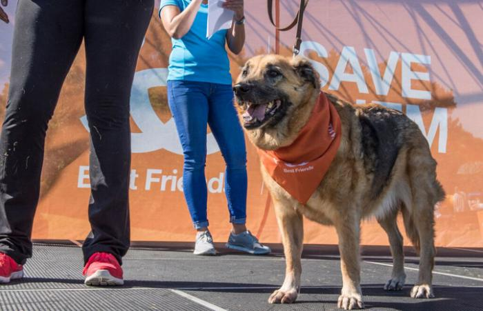 It was Celeste the shepherd mix's time to shine at the Minnesota Strut Your Mutt