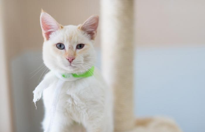 Donatello the Siamess kitten is like a brilliant ray of sunlight, thanks to the lifesaving care he received at Best Friends