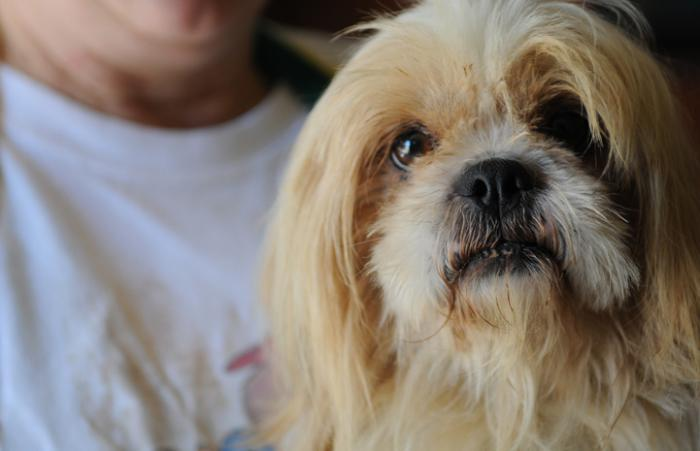 White fluffy dog who was rescued from a puppy mill being held