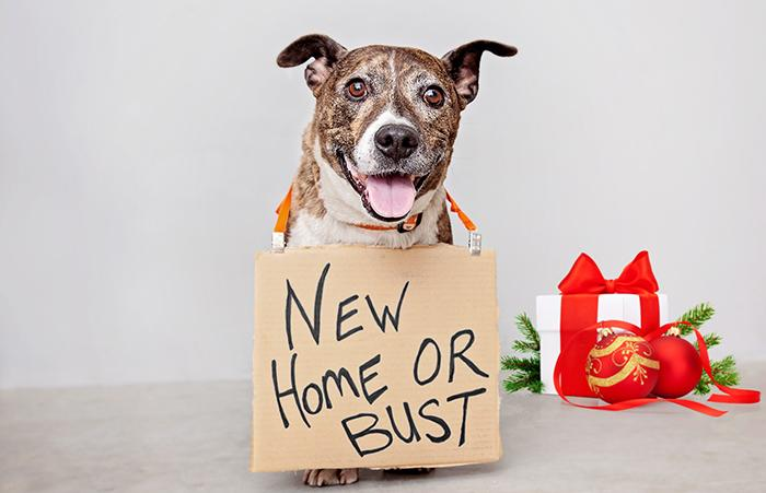 'New Home Or Bust' dog for Black Friday pet adoption event from Best Friends and Zappos