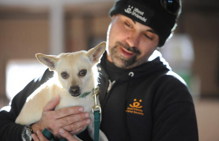 Dogtown caregiver Haven with Jazz the Chihuahua/toy fox terrier mix