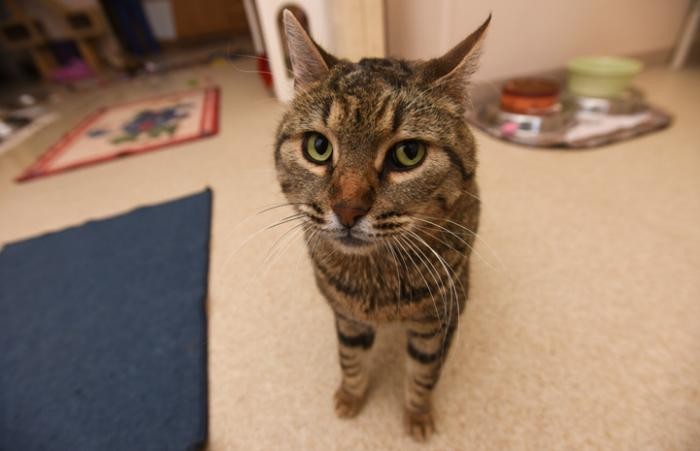 Spud the cat has a bright future despite his neurological condition.