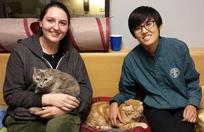Wampum and Sweet Cheeks, FIV-positive cats, and their new family