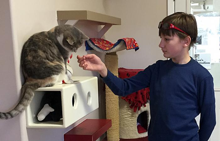 Autistic boy volunteering with cats at Cat World