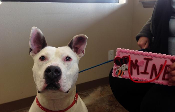 Batman, a pit bull terrier adopted through 'The One' adoption promotion