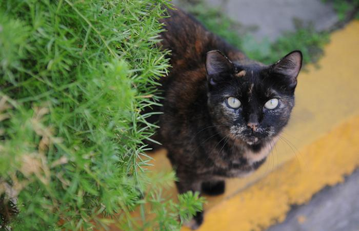 multicolored cat standing on a curb looking at the camera