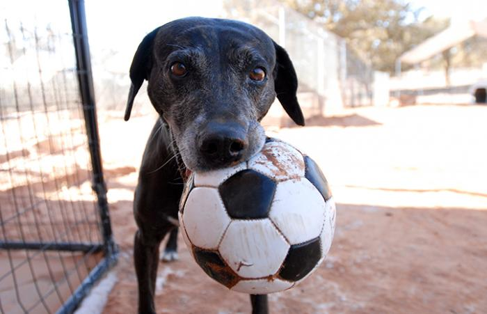 Pets of the week promotion helps longtime Sanctuary resident Celine the black Lab find a home.