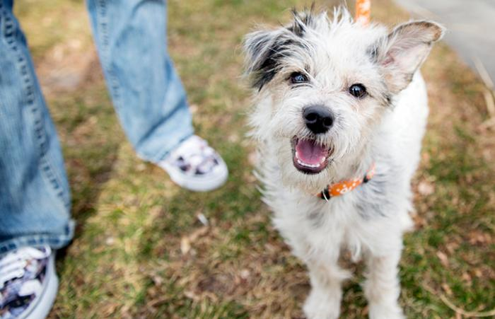 Terrier dog rescued from puppy mill