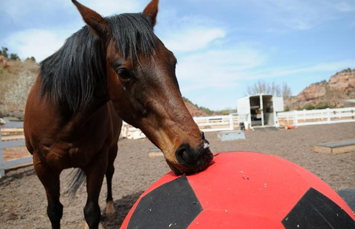 Felix the horse who has equine choke with the Parelli ball