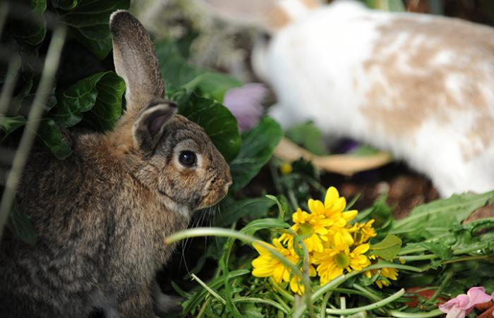 Rabbit with some greens and yellow flowers
