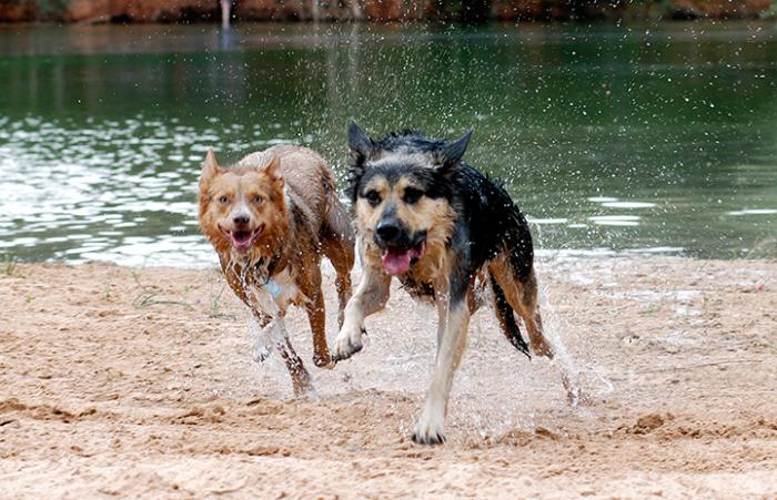 First day of summer, dogs running on the beach