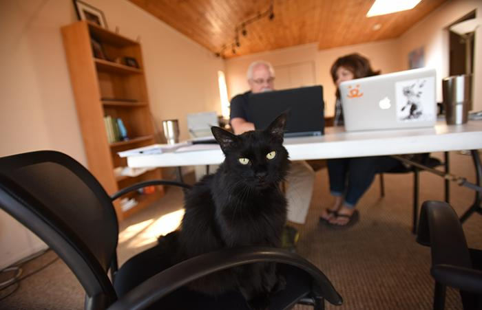 Carmelo the corporate cat's promotion lands him a job as an executive office pet