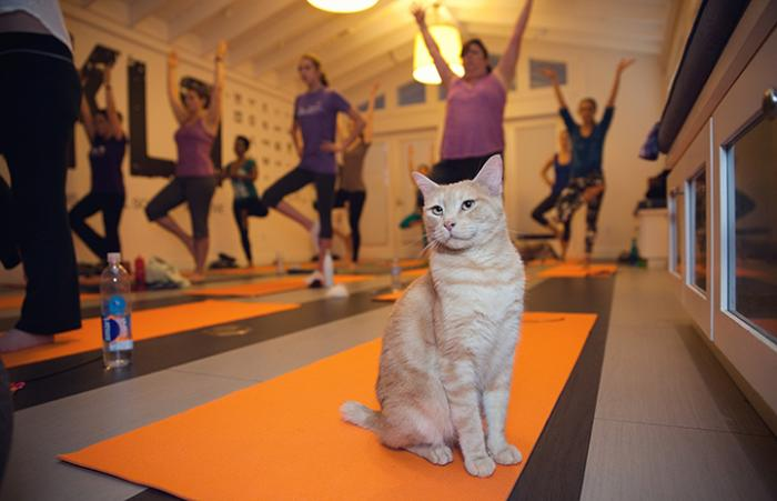 Cat hanging out with people in a yoga class