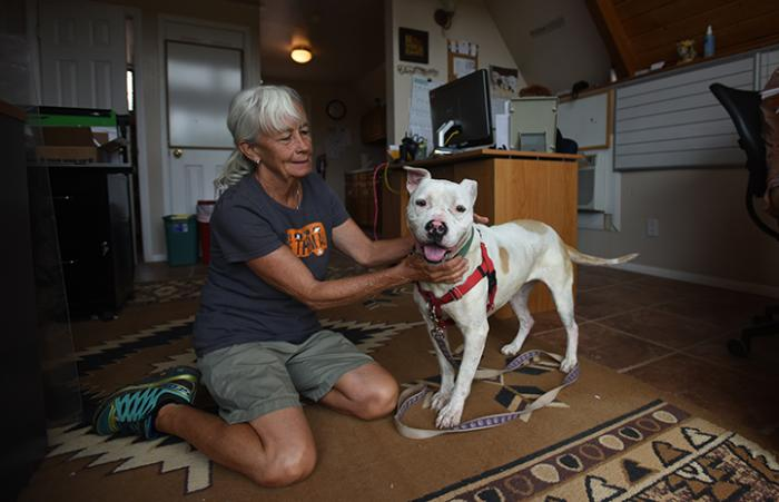 Destiny the pit bull terrier mix who has lupus with Deb