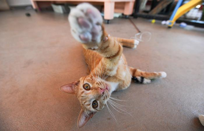"""Barney the cat reaching out for the camera with his paw as if to say, """"Talk to the paw!"""""""