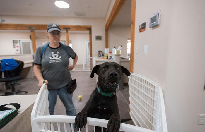 Hooper the black Lab mix has had a longer than average stay in Dogtown admissions