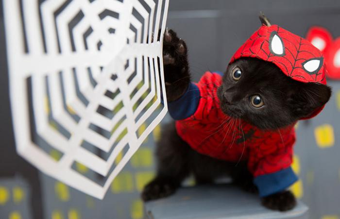 Kitten dressed up as Spiderman