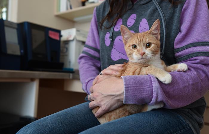 Wally the kitten sitting in someone's lap