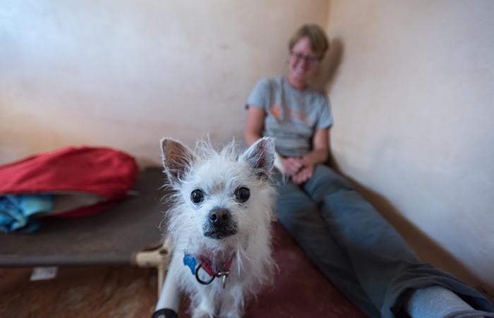 Taters the small senior dog is available for adoption
