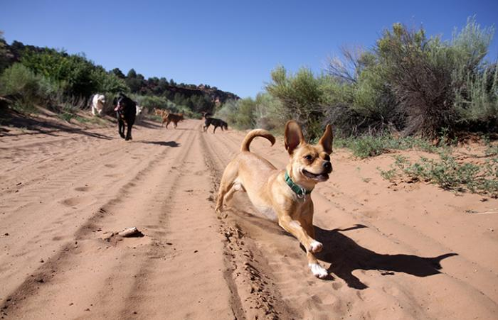 Dogs running and exercising more